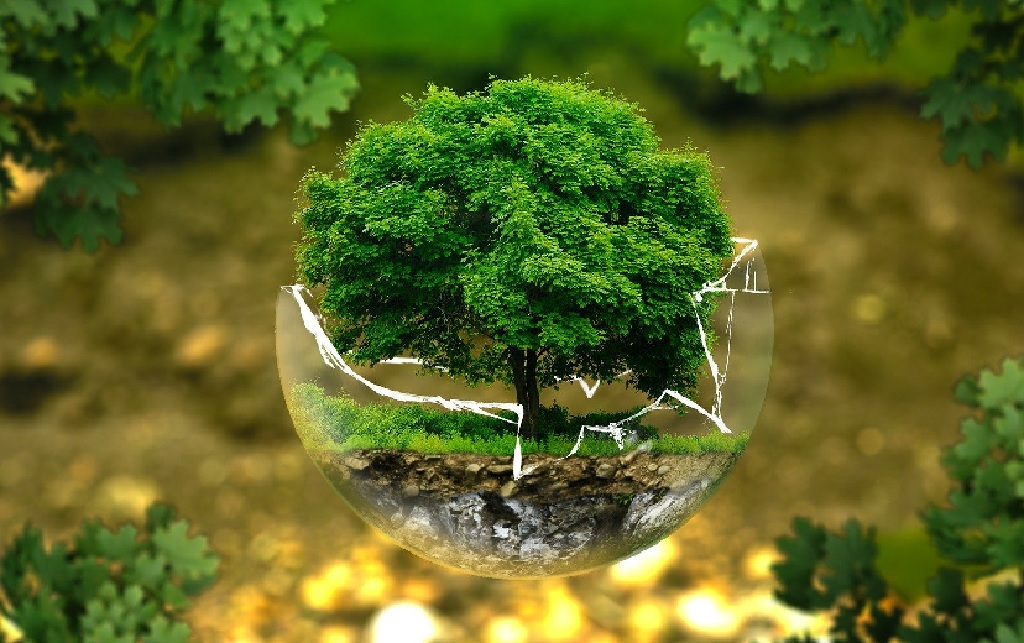 What does sustainability mean to you?